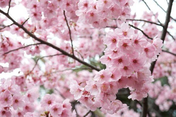 luksuz-turizam-odmor-destinacija-putovanje-japan (3)
