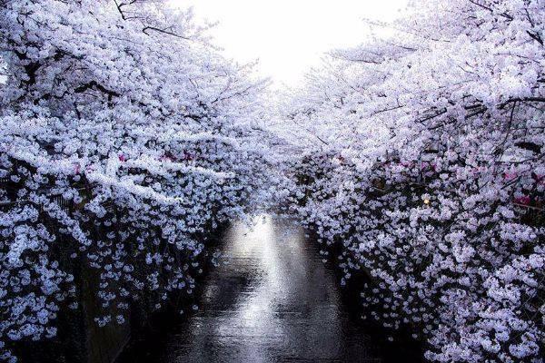 luksuz-turizam-odmor-destinacija-putovanje-japan (4)