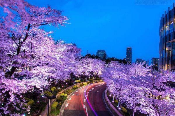 luksuz-turizam-odmor-destinacija-putovanje-japan (5)