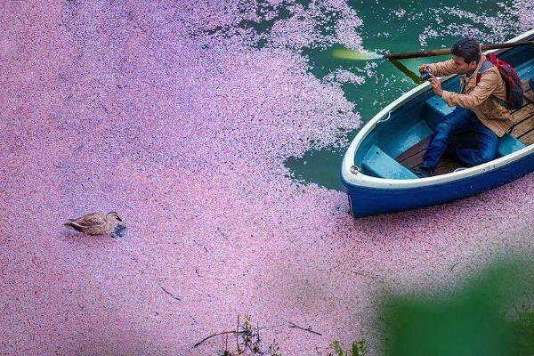 luksuz-turizam-odmor-destinacija-putovanje-japan (8)