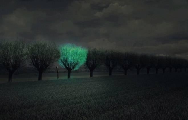 Biljka-Svetlost-Drvece-Bioluminescencija 4