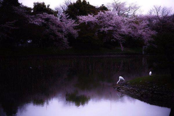 luksuz-turizam-odmor-destinacija-putovanje-japan (12)