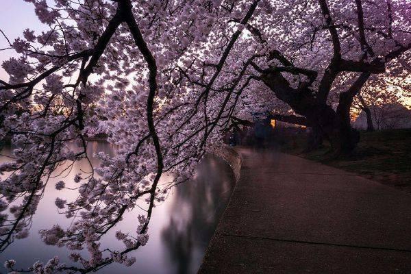 luksuz-turizam-odmor-destinacija-putovanje-japan (13)