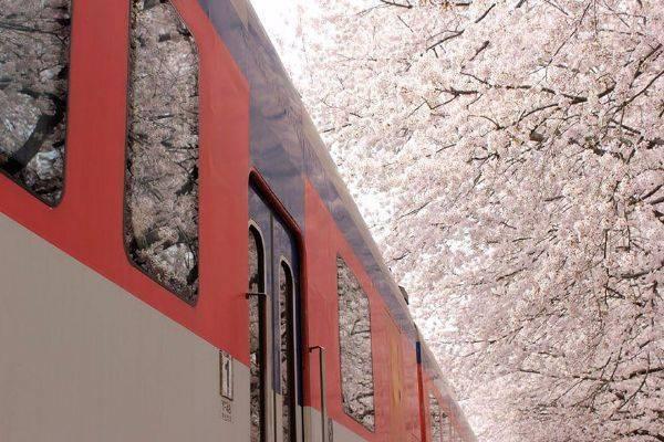 luksuz-turizam-odmor-destinacija-putovanje-japan (7)