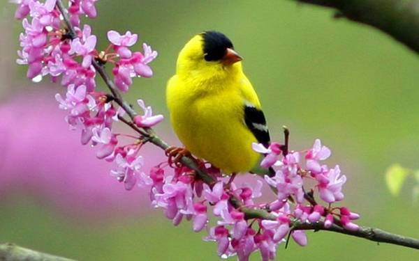 pictures-of-birds-and-flowers